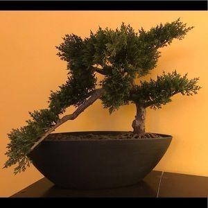 Other - Faux Bonsai Tree
